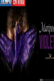 Mariposas Violeta