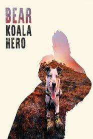 Bear: Koala Hero
