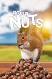Going Nuts – Tales from the Squirrel World
